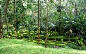 Yaoundé : le bois saint Anasthasie est dans un état…