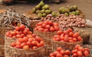 Yaoundé : le prix du cageot de tomate oscille entre…